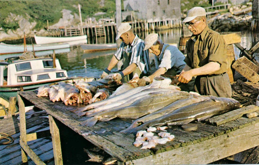 Terence Bay Cleaning Cod Fish.jpg