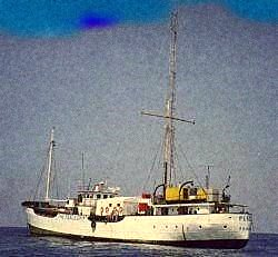MV Peace - schip in vol ornaat.jpg